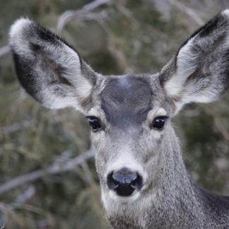 deer-702694_960_720